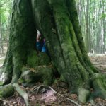 Deravý strom cestou na Priesil (autor foto: Arpád Takács)
